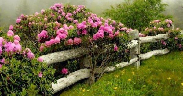 Cerco de troncos cercos y jard n pinterest troncos for Arbustos para jardin