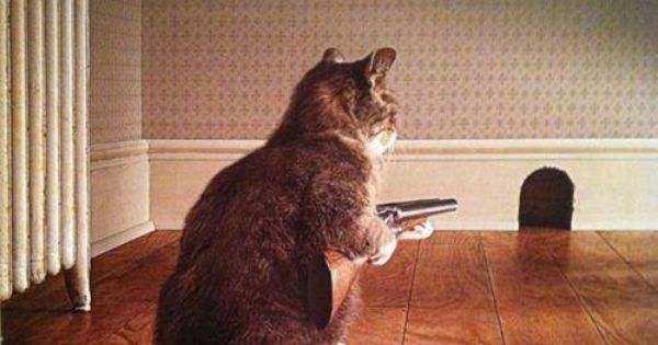 Cat With Gun At Mouse Hole Amusing Pictures Pinterest