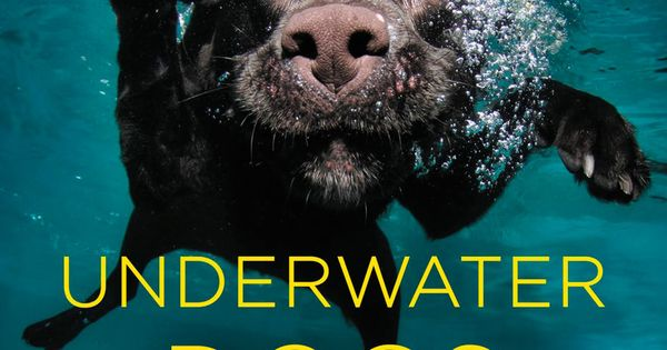 Underwater Dogs - great coffee table book! LOVE the photography and dogs