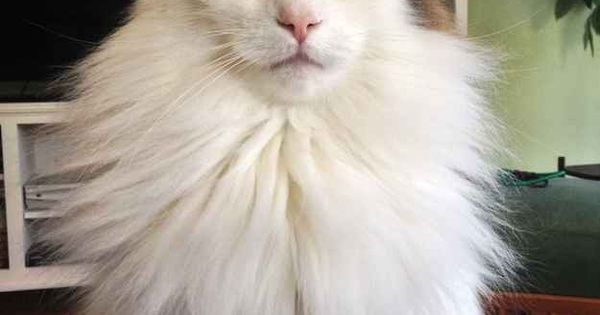 da cat hairy popular