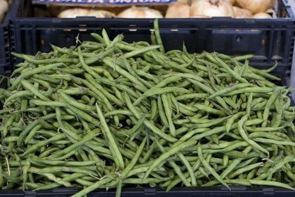 How To Grow Pole Beans In Containers Pole Beans Companion Planting Growing Green Beans