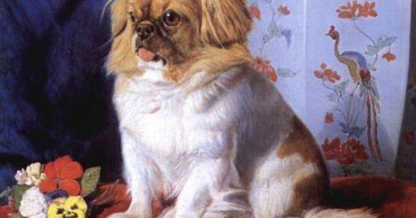 Looty By Friedrich Wilhelm Keyl 1861 Dog Paintings Pekingese Pekingese Dogs