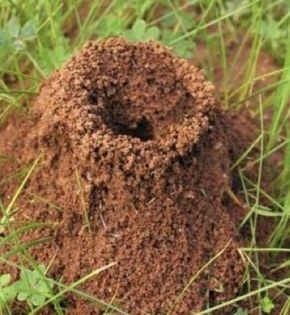 Controlling Ants How To Get Rid Of Ants In Lawns And Gardens