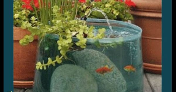 Outdoor Aquarium, Gardens Ideas, Water Gardens, Aquariums Ponds, Pop Up, Fish Tanks,