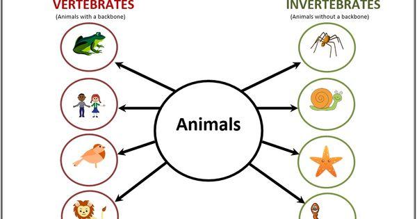 vertebrates and invertebrates differentiation graphic organizers and students. Black Bedroom Furniture Sets. Home Design Ideas