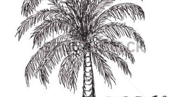 Coconut Tree Drawing Stock Vector 110752385 Shutterstock