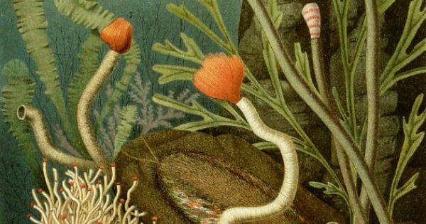 annelids ringed worms Annelids, or segmented worms, reproduce both sexually and asexually  depending on the species in this lesson you'll learn about how some of the.
