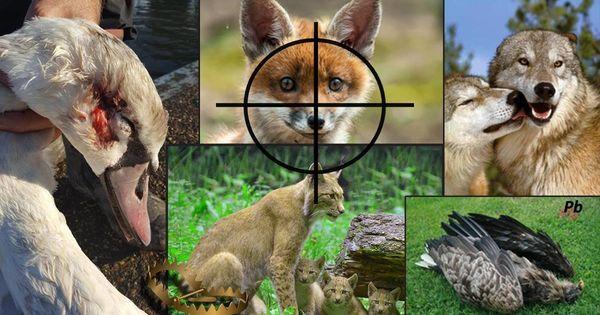 Jede Dritte Tierart Ist In Deutschland Bedroht Der Skandal Gefahrdete Tierarten Durfen In Deutschland Ganz Legal Gejag Tiere Tiere Wild Wilde Tiere