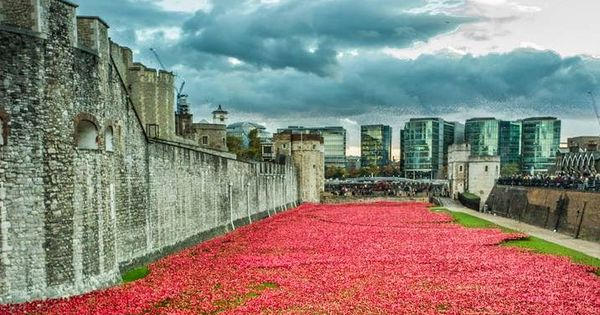 remembrance day london uk 2014