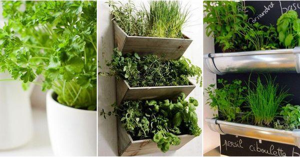 Diy jardines verticales de hierbas plantas pinterest - Plantas para jardines verticales ...