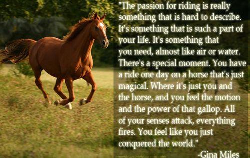 Gina Miles... horse quote