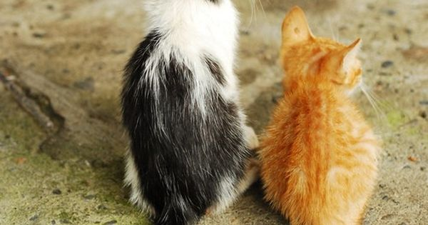 I WILL get an orange cat one day.