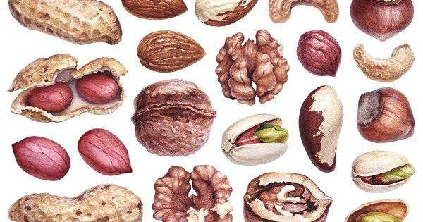 Watercolour illustrations of nuts – peanuts, walnut, almond, pistachios, groundnuts