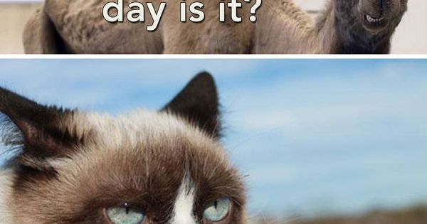 pin by traceyjean on sarcastic grumpy cat pinterest