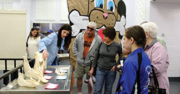 Lsu School Of Veterinary Medicine Hosts 32nd Annual Open House