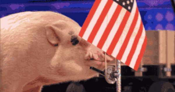 American Flags Made In China Are Banned In The U S Military American Flag Giphy Love New Trends