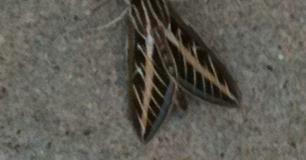 Cool Moth  Animals Pinterest