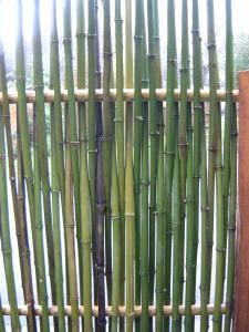 Epingle Par Julie Thurston Sur Fence En 2019 Bambou Bambous