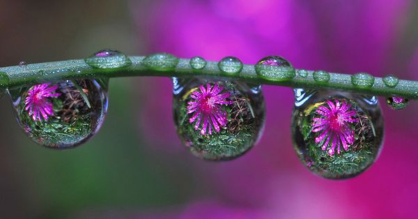 Purple flowers - raindrops