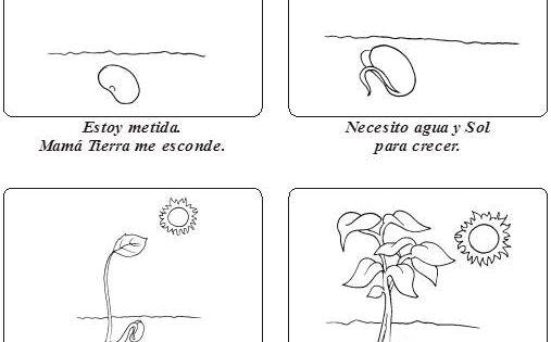 GERMINACION DE Una Planta Para Colorear - Imagui