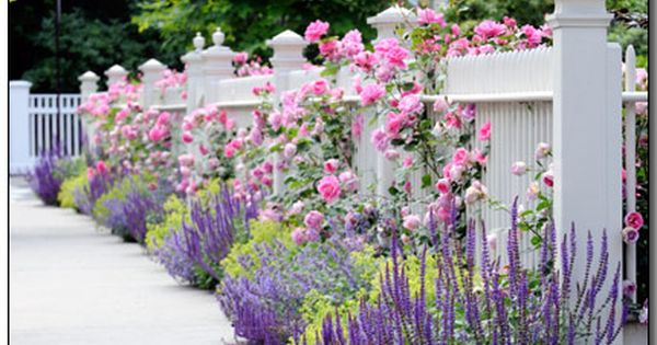 Pin By Nicole Buch On Plant Combos Cottage Garden Garden Design Gorgeous Gardens