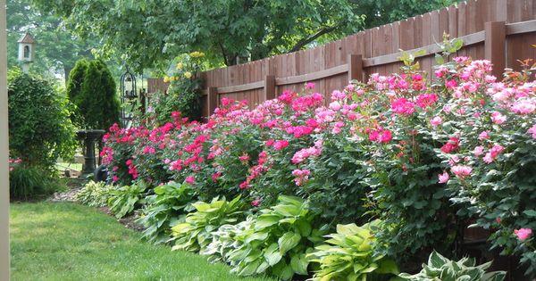 Hosta and hydrangea side yard