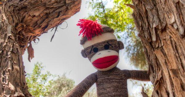 The adventures of Captain Jack Sock! | Sock Monkeys | Pinterest | The ...