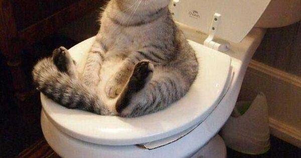 Cat Pooping In Dog Bowl