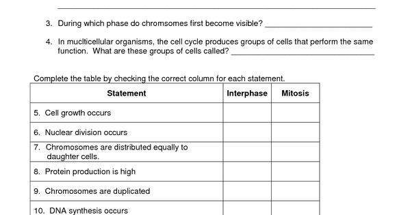 mitosis worksheet   Biology   Pinterest   Mitosis and Worksheets