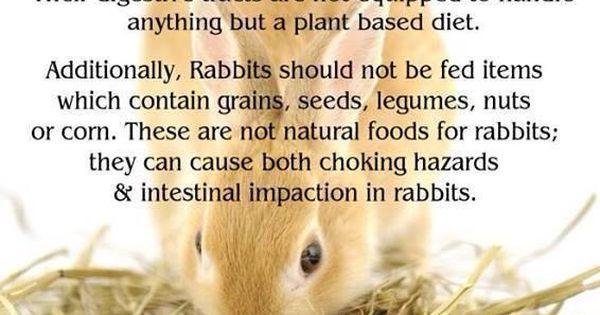 rabbits truths on rabbit bunny and bun bun