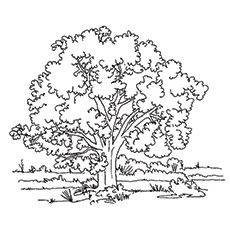 Top 25 Tree Coloring Pages For Your Little Ones Tree Coloring Page Christmas Tree Coloring Page Free Coloring Pages