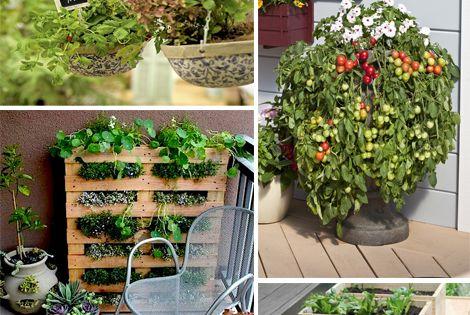 Piante Aromatiche Terrazzo : Orto terrazzo verticale piante aromatiche ortaggi