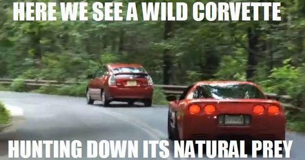 15 Hilarious Corvette Memes Prius Jokes Car Jokes Funny Car Memes