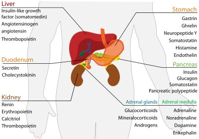 Endocrine system charts and morning sickness on pinterest