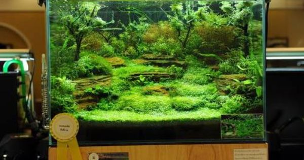 Terraces in a planted aquarium what do you think hobby for Love on the terraces