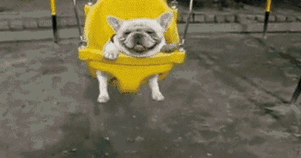 11 Dogs Who Can T Wait For Spring Cute Animals Cute Dogs Animals