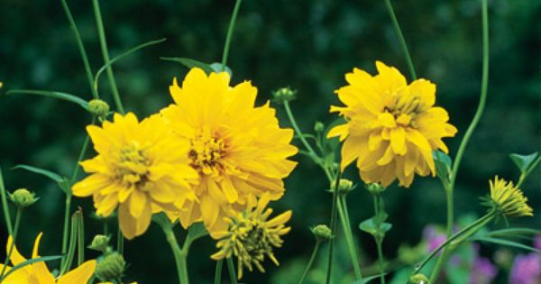 Google Image Result For Http Www Masslocalfood Org Shop Members Getimage Php Image Id 53 Plants Flowers Garden