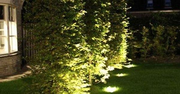 Hedge Uplights Outdoor Landscape Lighting Diy Outdoor Lighting Landscape Lighting
