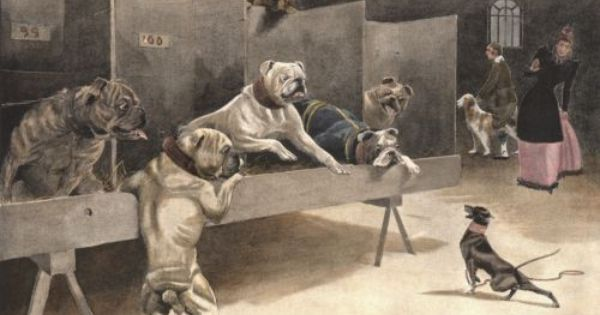 Vintage Bulldog Print English Toy Terrier Bulldog Breeds Dog