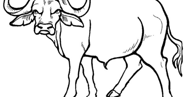 Wild animal coloring page African Buffalo Coloring page