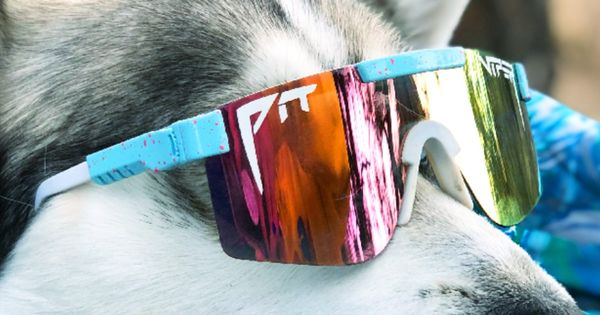 The Gobby Polarized In 2021 Pit Viper Sunglasses Pit Viper Cute Baby Cow