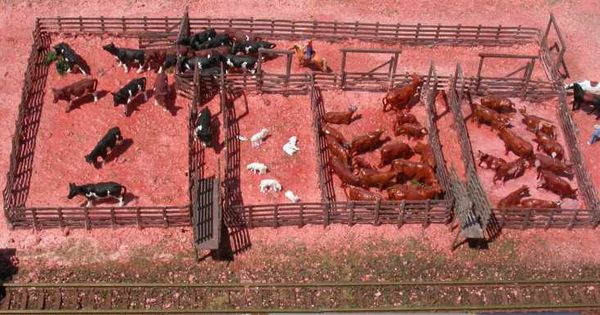 Cattle Pens Design For Small Herds Yahoo Image Search