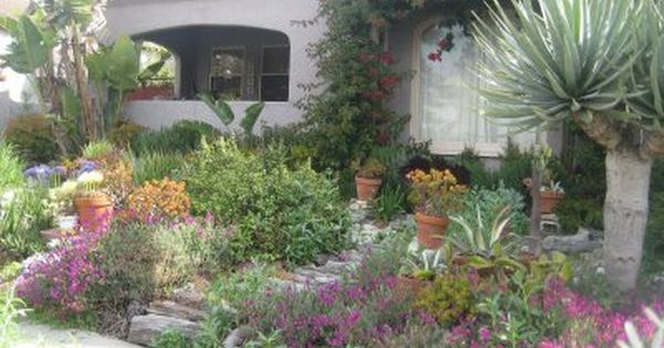Feature drought tolerant and california native plants and for Drought tolerant yard