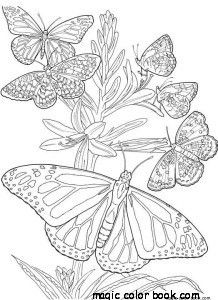 Butterfly Summer Flower Coloring Pages Online Free Girl