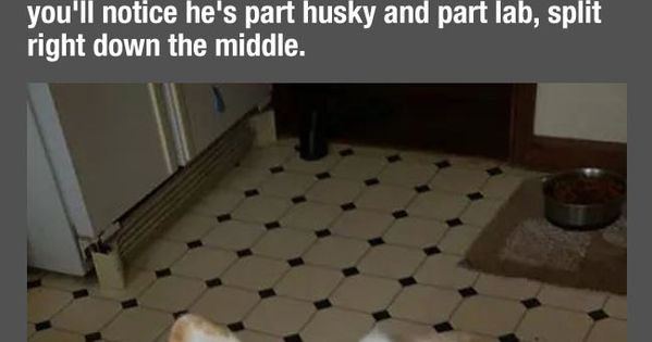 Look At What Happens When You Cover Half Of This Dog's ...