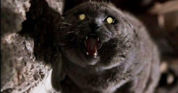 6a00d83451b49169e20133ecf20075970b 500wi Jpg 400 284 Cat Movie Pet Cemetery Creepy Cat