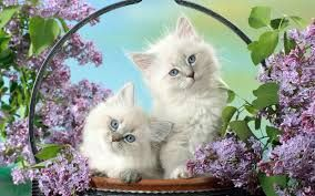 Pin By Website Template On Cute Animals Images Of Cute Cats Kitten Wallpaper Cute Cat Wallpaper