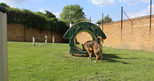West London Fenced Dog Areas The Ultimate Guide Dog Area Dog Exercise Dogs