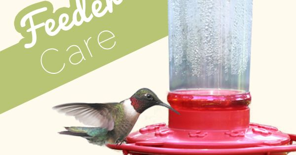 Hummingbird feed