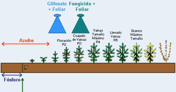 etapas fenologicas del soya buscar con google agricultura etapas fenologicas del soya buscar con google agricultura search